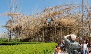 Care to Climb: Big Bambu in New York City