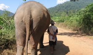 Walking with Elephants in Thailand
