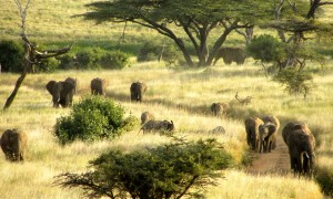 Rhinos and Elephants, Oh MY!