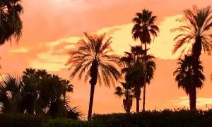 Ultimate Cool: Palm Springs Modernism Week