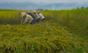 Fabulous Photo Shoot: Vietnam Rice Paddies