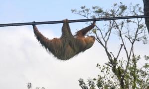 Costa Rica: Wonderful Wildlife