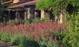 The Importance of Place: Rancho La Puerta