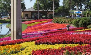 Guest Blogger Gives Disney World Advice