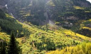 Aspen trees in September.  No words needed.