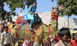 Camel Traffic Jams, Pushkar Camel Festival