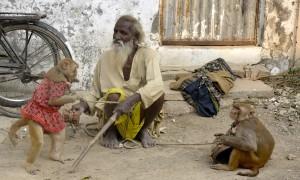 Sensory Overload in Dehli, India