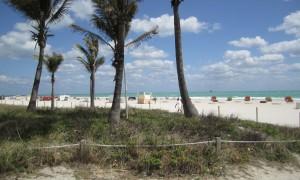 Miami on my Mind