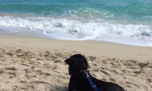 Traveling to DesignDestinations with your Dog