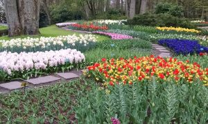 Tulip Time in the Old World:The Keukenhof