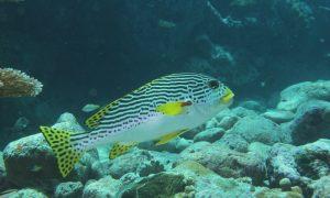 Palau's Underwater World