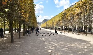 Meandering Paris–Come Walk with me