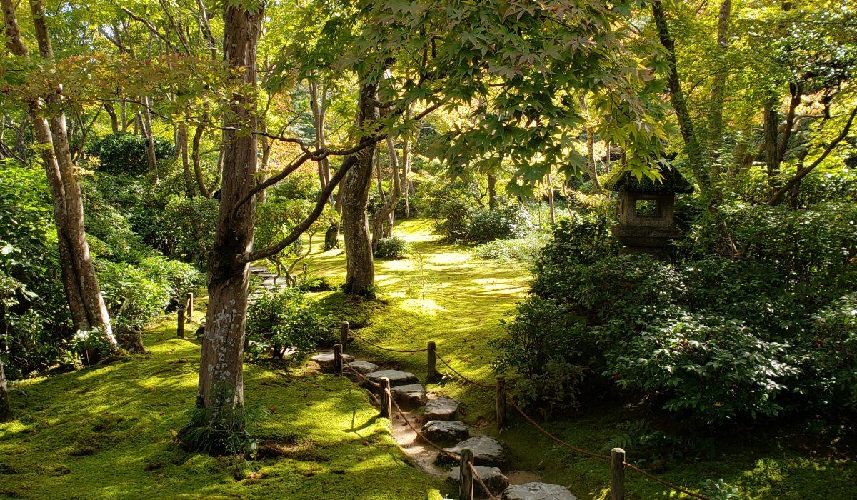 Solo in Arashiyama, Kyoto